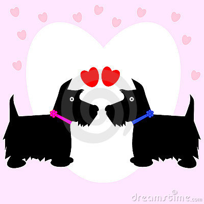 Valentine dog scottie love couple