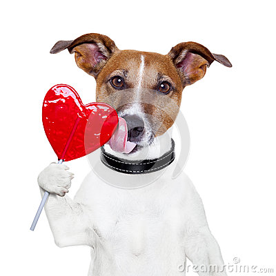 Valentine lollipop heart dog licking