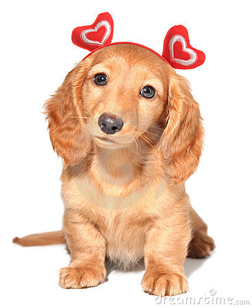 Free Valentine Puppy Royalty Free Stock Images - 12554259