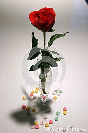 Free Valentine Rose Royalty Free Stock Image - 57826