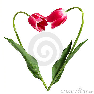 Free Valentine S Day Royalty Free Stock Photos - 22818118