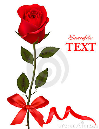 Valentine`s day card. Beauty red rose with bow.