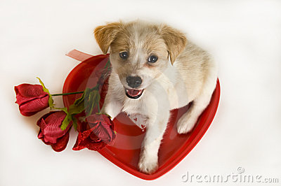 Valentine s Day Puppy with heart and roses
