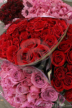 Valentine s Day Roses