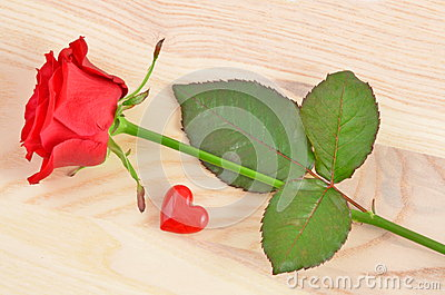 Valentines day concept. Red Rose and Heart