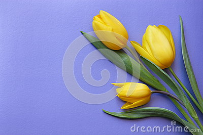 Valentines  Day Tulips Romantic Card  - Stock Photo