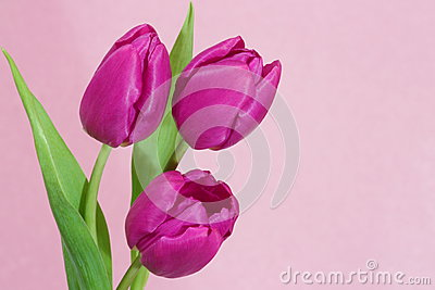 Valentines or Mothers Day Card - Stock Photo