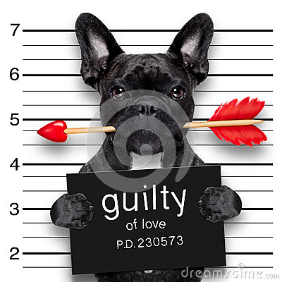 Free Valentines Mugshot Dog Royalty Free Stock Photography - 65133117