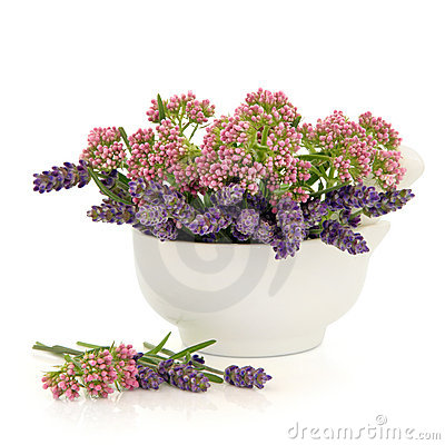 Valerian and Lavender Herb Flowers