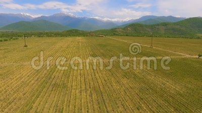 Vallée d'Alazani, vignobles en Géorgie, tradition de la vinification, vue aérienne banque de vidéos