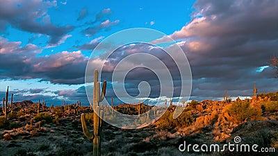 Van de de woestijnzonsondergang van Arizona de video van de de tijdtijdspanne met cactus