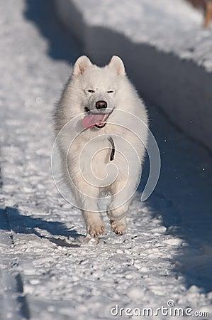Van een hond looppas, looppas!