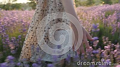 Van het de handmeisje van close-upvingers de zachte aanraking de lavendel van installatiesbloemen het bloeien seizoen stock video
