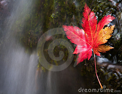 Vanchin river. Autumn. Red leaf 2.