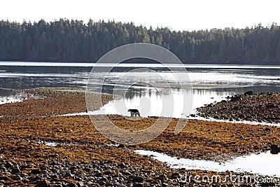 Vancouver Island environment