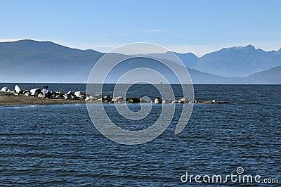 Vancouver - Kitsilano Beaches