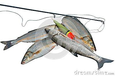 Vangst van vissen 17