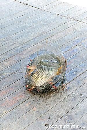 Vangst van vissen