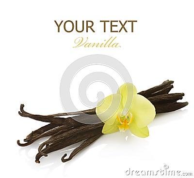 Free Vanilla Stock Images - 12880014