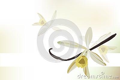 Vanilla  background