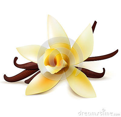 Free Vanilla Flower And Pods Stock Photos - 50357773