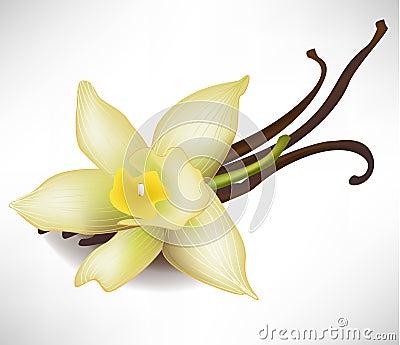 Vanilla flower and sticks