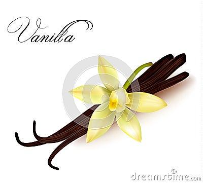 Vanilla pods and flower.