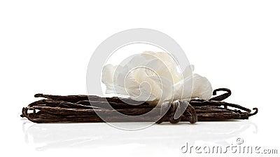 Vanilla with white flower