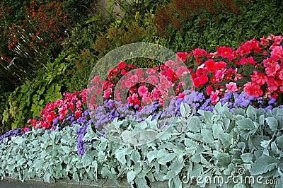 Varied flowerbed Stock Photo
