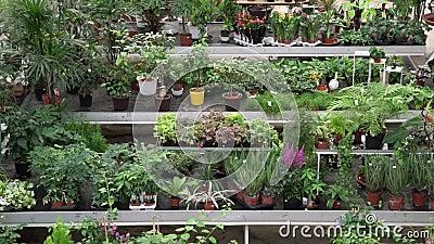 Variedad grande de plantas y de flores dentro de la casa verde botánica Naranjal hermoso por completo de plantas decorativas, rar almacen de metraje de vídeo