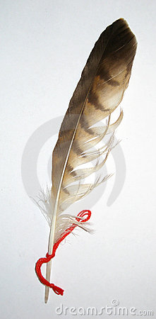 Variegated feather