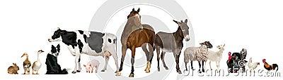 Variety of farm animals