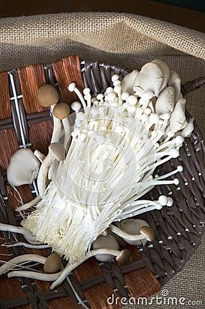 Variety of mushrooms on sackcloth
