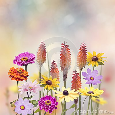 Free Variety Of Colorful Flowers Stock Image - 103972431