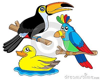 Various birds collection 01