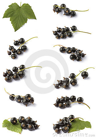 Various blackcurrant