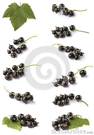Various blackcurrant