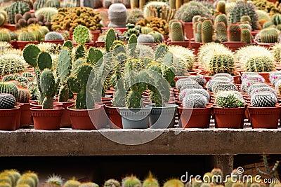 Various cacti