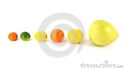 Various citrus fruit