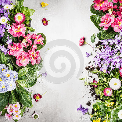Free Various Colorful Garden Flowers And Plants ,top View, Frame Stock Photos - 91486253