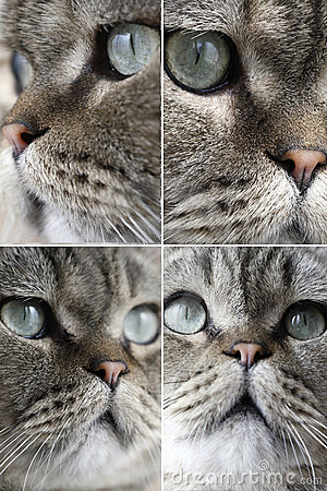 Various faces of the cat