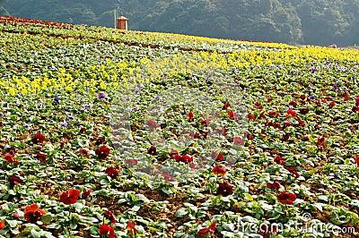 Various of flowers