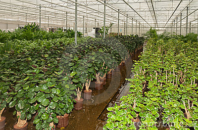 Various Houseplants In A Plant Nursery Stock Photo - Image: 24240730