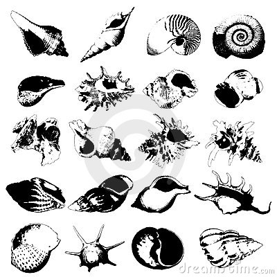 Various kind of seashells