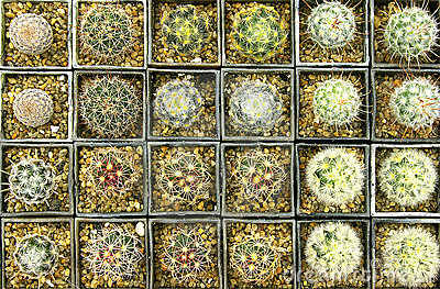 Various kinds of cactuses