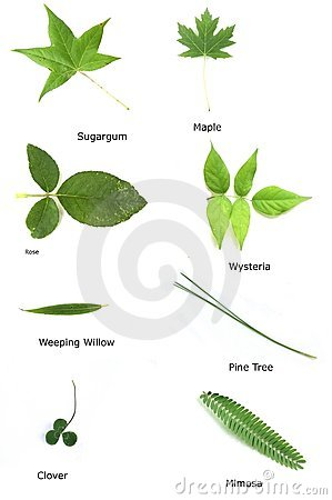 Various Leaves