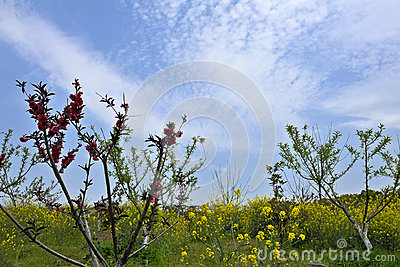 Various spring flowers towards the blue sky