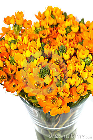 Vase with orange kalanchoe
