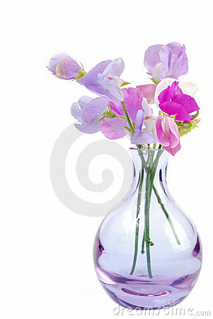 Vase of sweet pea flowers