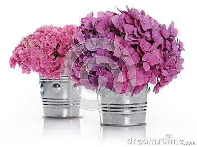 vases avec des bouquets d 39 hortensia images libres de droits image 32381589. Black Bedroom Furniture Sets. Home Design Ideas